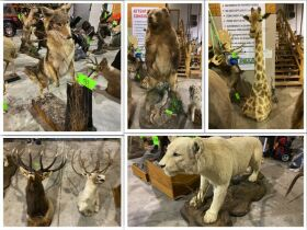 Taxidermy Man Cave Auction - Large Collection! featured photo 1