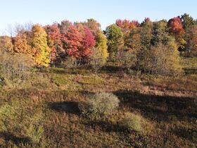 113.78 Acres – 5 Parcels – Wooded & Open with Sites featured photo 2