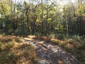 113.78 Acres – 5 Parcels – Wooded & Open with Sites featured photo 7