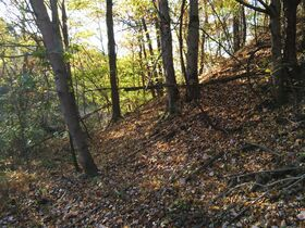 113.78 Acres – 5 Parcels – Wooded & Open with Sites featured photo 8