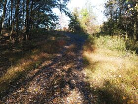 113.78 Acres – 5 Parcels – Wooded & Open with Sites featured photo 10
