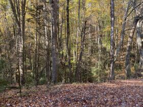 90 Acres - Johnson County, TN featured photo 3