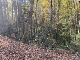 90 Acres - Johnson County, TN featured photo 4