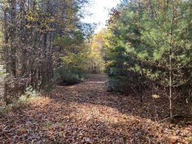 90 Acres - Johnson County, TN featured photo 1