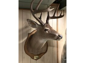 Fall Sportsmans Auction featured photo 9