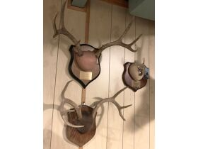 Fall Sportsmans Auction featured photo 11