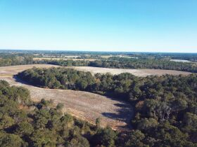 189 ± Acres   Excellent Ag and Timber Tract   Beautiful Homesites featured photo 3