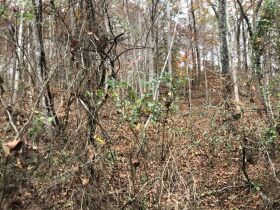 107 Acres - Beautiful Views- Bluff City, TN featured photo 10
