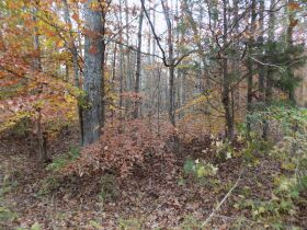 5.94 Acres * Wooded * Creek Frontage featured photo 1