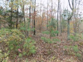 5.94 Acres * Wooded * Creek Frontage featured photo 4