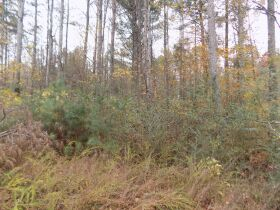 5.94 Acres * Wooded * Creek Frontage featured photo 5