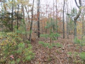 5.94 Acres * Wooded * Creek Frontage featured photo 6