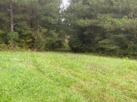 Absolute Auction 4 Tracts of Beautiful Property in McMinn County featured photo 10