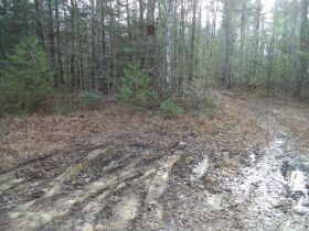 61.29 Acres in 6 Tracts on Williams Creek Road, Oneida, TN * Pre-Auction Offer Accepted * SOLD* featured photo 3