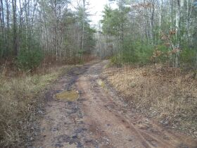 61.29 Acres in 6 Tracts on Williams Creek Road, Oneida, TN * Pre-Auction Offer Accepted * SOLD* featured photo 5