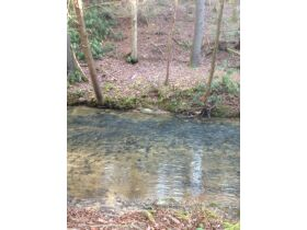 61.29 Acres in 6 Tracts on Williams Creek Road, Oneida, TN * Pre-Auction Offer Accepted * SOLD* featured photo 11