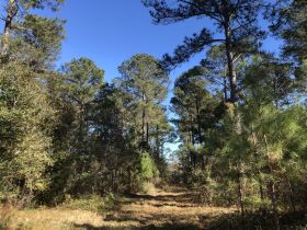 109 ± Acres   Excellent Recreational Tract   Beautiful Homesites featured photo 9
