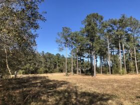 109 ± Acres   Excellent Recreational Tract   Beautiful Homesites featured photo 4
