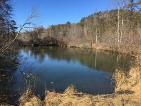 Online Only Auction - 130 acres off Big Four Rd. featured photo 4