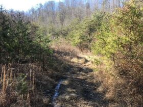Online Only Auction - 130 acres off Big Four Rd. featured photo 6