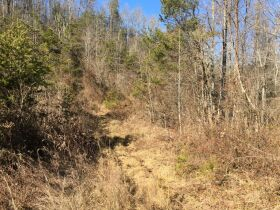Online Only Auction - 130 acres off Big Four Rd. featured photo 7