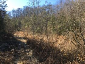 Online Only Auction - 130 acres off Big Four Rd. featured photo 8