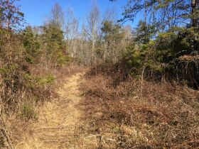 Online Only Auction - 130 acres off Big Four Rd. featured photo 9