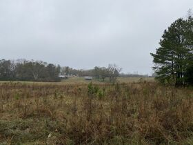 33 acres offered in tracts and combinations in Jemison, Alabama.  The Roy Martin Estate featured photo 5
