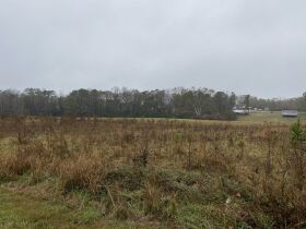 33 acres offered in tracts and combinations in Jemison, Alabama.  The Roy Martin Estate featured photo 6