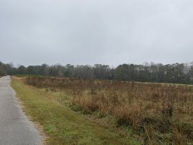 33 acres offered in tracts and combinations in Jemison, Alabama.  The Roy Martin Estate featured photo 7