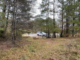 33 acres offered in tracts and combinations in Jemison, Alabama.  The Roy Martin Estate featured photo 9