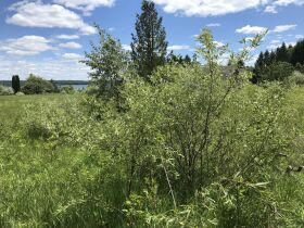Torch Lake Vacant Land- 2.1 Acres- DNR Properties featured photo 12