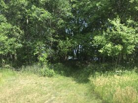 Forested Vacant Lot on Lakeshore Dr, Escanaba- DNR Properties featured photo 4