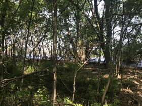Forested Vacant Lot on Lakeshore Dr, Escanaba- DNR Properties featured photo 8
