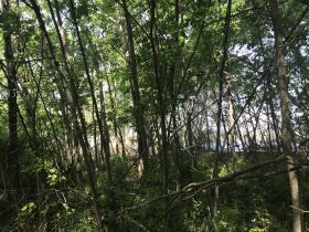 Forested Vacant Lot on Lakeshore Dr, Escanaba- DNR Properties featured photo 10