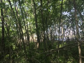 Forested Vacant Lot on Lakeshore Dr, Escanaba- DNR Properties featured photo 11