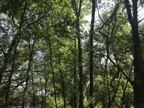 Forested Vacant Lot on Lakeshore Dr, Escanaba- DNR Properties featured photo 12