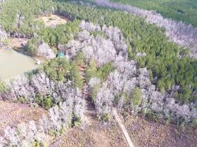 38+/- Acres w/ Cabin, Pond and Timber in Montgomery County, NC featured photo 9