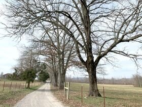 168+/- Acres Offered in Tracts - House, Barns, 4 Ponds - Soil Sites & Utilities Available - Auction May 27th featured photo 7