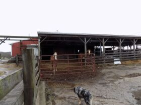 F866   1619 Butler Branch Road, Flemingsburg, KY 41041   (Farm) (Residential) featured photo 11
