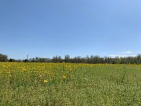 60+/- Acres Offered in Tracts - Range from 5+/- Acres to 12+/- Acres Each - Mobile Home & Barn featured photo 4