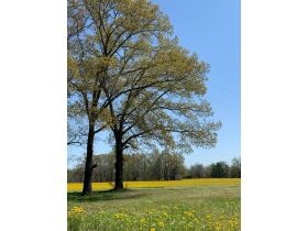 60+/- Acres Offered in Tracts - Range from 5+/- Acres to 12+/- Acres Each - Mobile Home & Barn featured photo 3