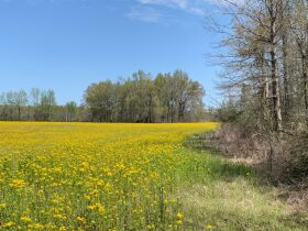 60+/- Acres Offered in Tracts - Range from 5+/- Acres to 12+/- Acres Each - Mobile Home & Barn featured photo 2