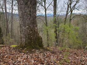 The Sam Wesley Patterson Estate: 88 Acre Smoky Mountain Farm featured photo 3