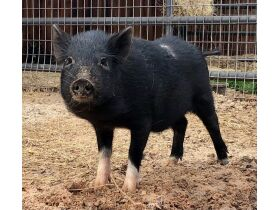 Parker County Impounded Livestock Auction - Online Only featured photo 4