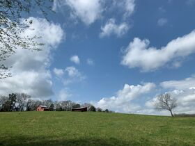 45+/- Acres Offered in Tracts - 4 BR, 3 BA One Level Home - Barns, Outbuildings, Pond, Creek - Auction July 17th featured photo 4