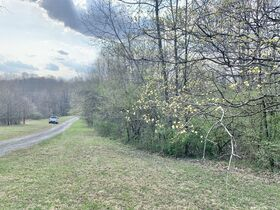 19 Acre Marion County Land featured photo 3