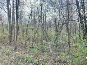 19 Acre Marion County Land featured photo 4