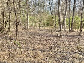 19 Acre Marion County Land featured photo 5