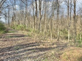 19 Acre Marion County Land featured photo 7